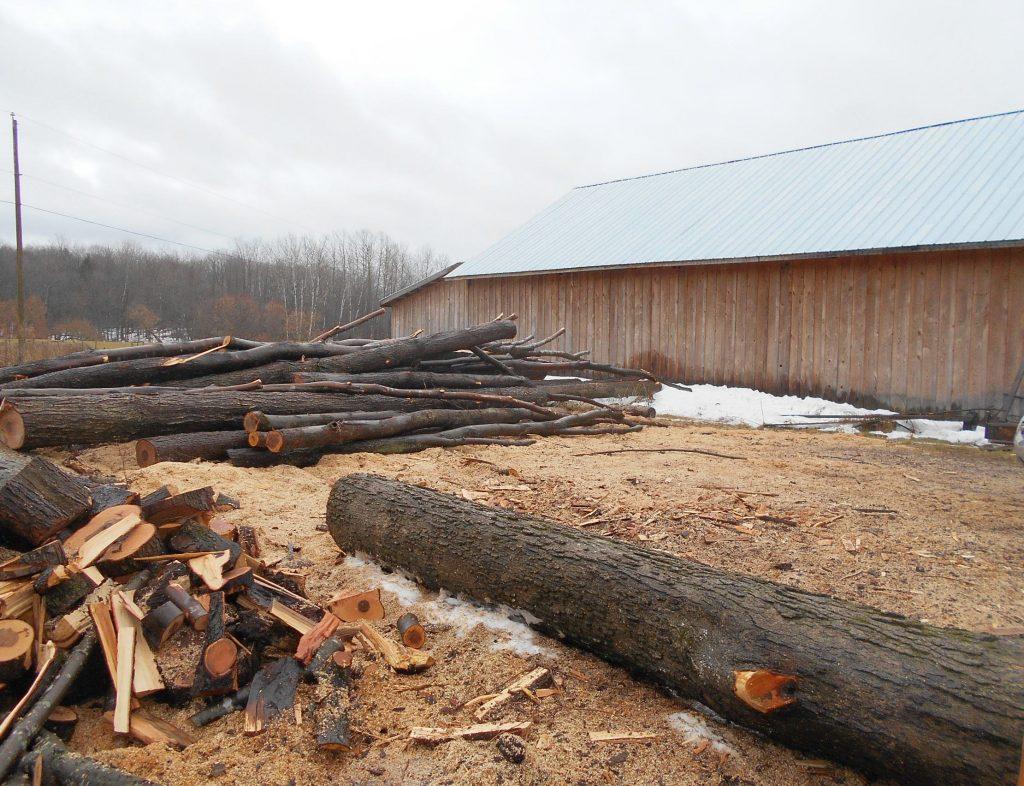 Billes de bois prêtes pour le séchoir