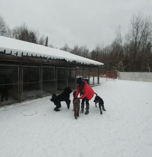 Chenil Lac Brome Kennel